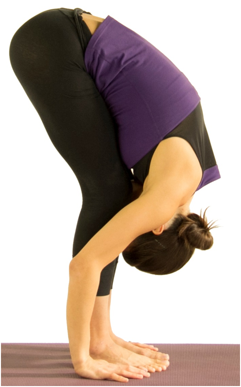 Uttanasana Or Standing Forward Bend Pose