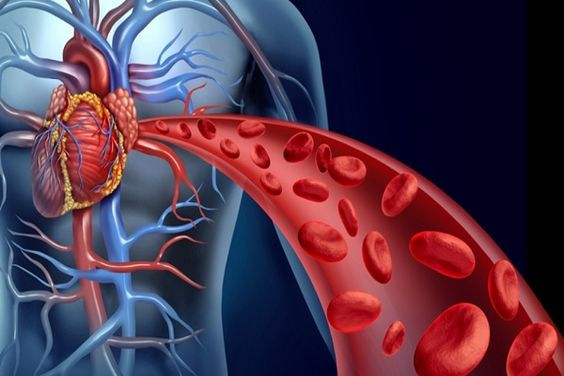 Improve Blood Flow