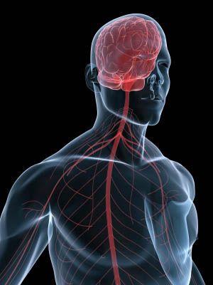 Improves Nervous System