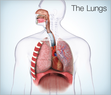 Cure Lung Problems