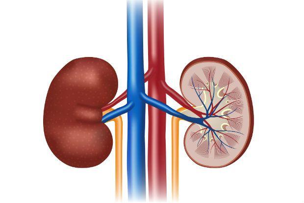 Good For Kidney