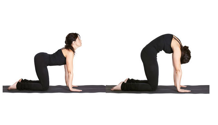 Marjariasana (The Cat Pose)